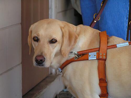 Uma cadela salva a vida de sua dona cega durante um incêndio