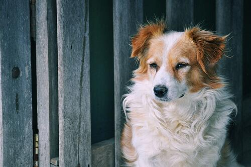 7 remédios caseiros para aliviar tosse nos cachorros