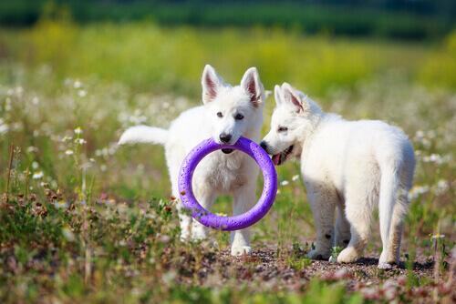 Brinquedos antiestresse para cães
