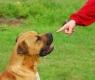 Um cão surdo aprende a língua de sinais
