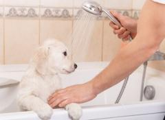 Cães gostam de tomar banho
