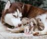 Cadela e seus fihotes