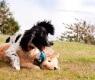 Brincadeiras com animais de estimação
