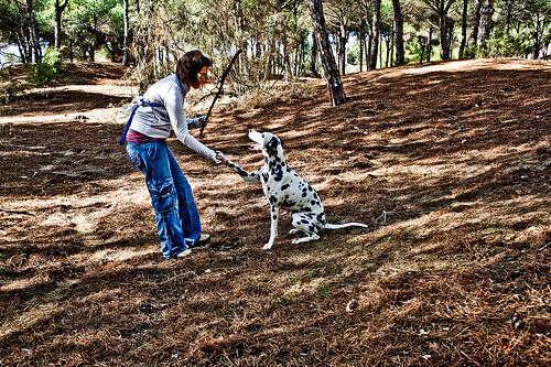 Como ensinar um cão a dar a pata