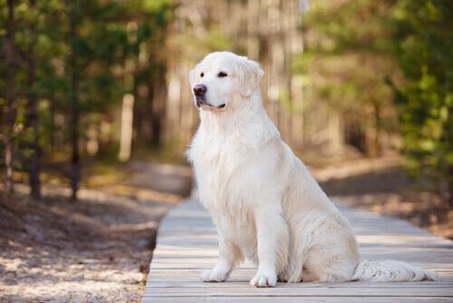 Alguns direitos que seu cão tem e você não sabia