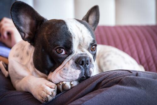 A fidelidade de um cão