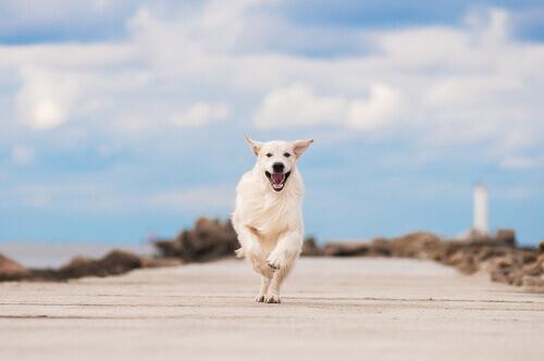 O estresse em cães
