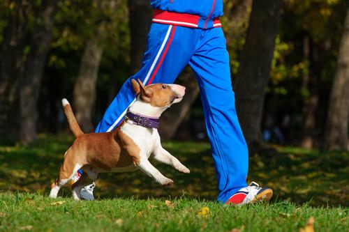 Cão correndo com seu dono