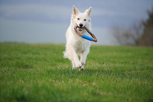 Exercício físico para cães