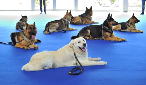 Fisioterapia animal