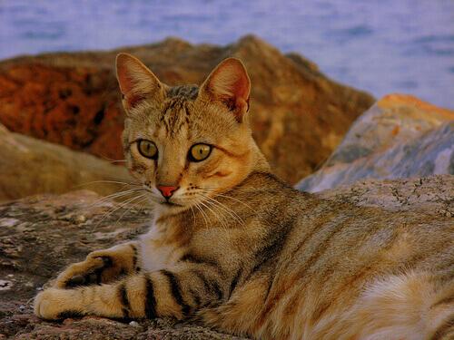 Os gatos e as viagens