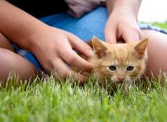 Os animais ajudam no estresse