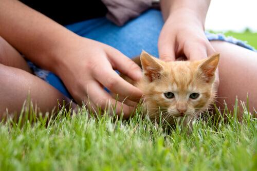 Estudo revela que os animais ajudam a combater o estresse
