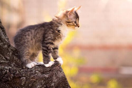 10 habilidades incríveis dos gatos