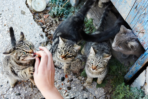 Gatos comendo