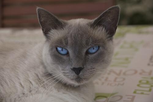 olhos-de-gato