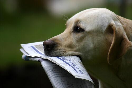 Owney, um cachorro viajante que se tornou celebridade nos EUA
