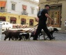 passeador-de-cães