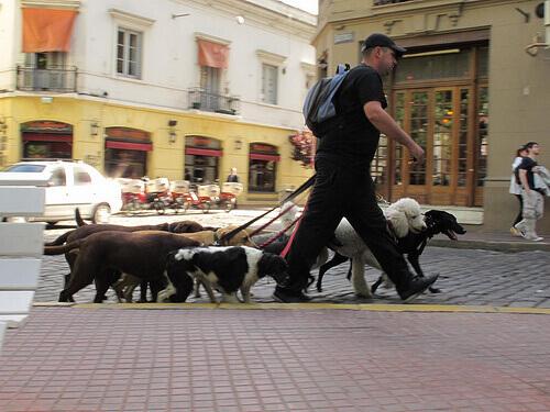O que observar em um passeador de cães
