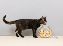petiscos-gato