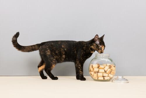 Como preparar guloseimas para seu gato