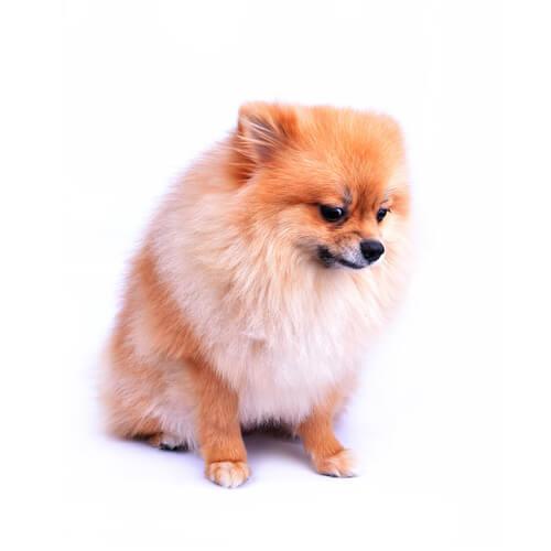 Lidando com cães nervosos