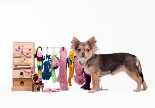Roupas para cachorro