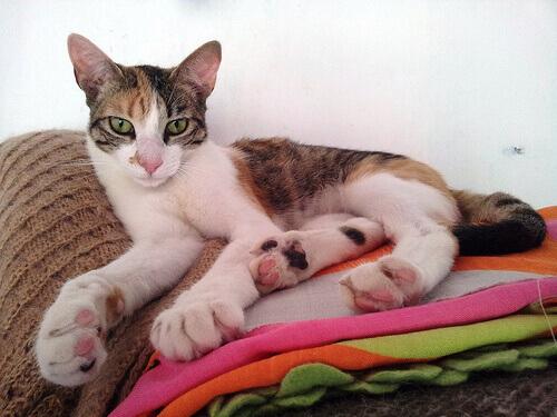 Como prevenir o tédio em gatos