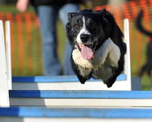Os adestradores caninos mais famosos da Espanha