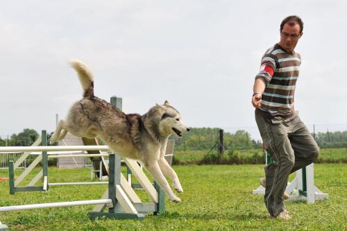 adestramento-canino2