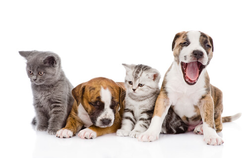 Cães e gatos