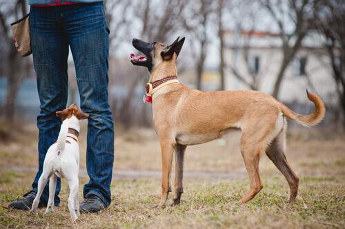 cães-entendem-pessoas