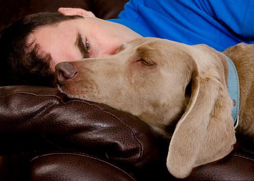 Cão dormindo com dono