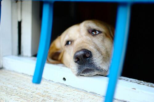Cão olhando pela janela