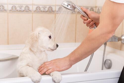 Cão tomando banho