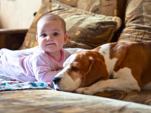 Cadela salva bebê de hipotermia