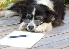 Artrose canina