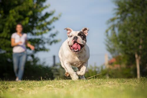 Conselhos para correr com seu cão