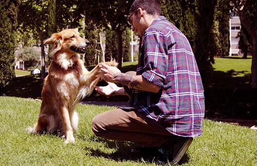 Cão dando a pata