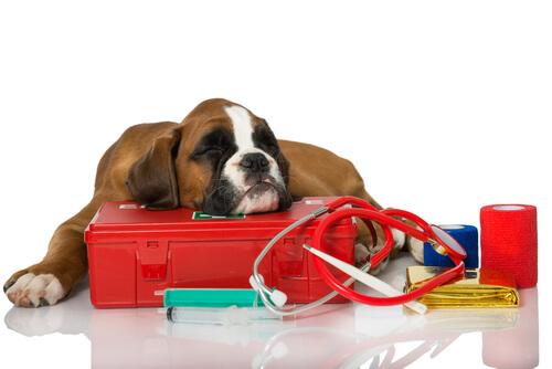 Cachorro deitado em instrumentos veterinários