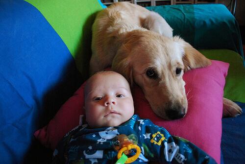 Cadela amamenta bebê abandonado