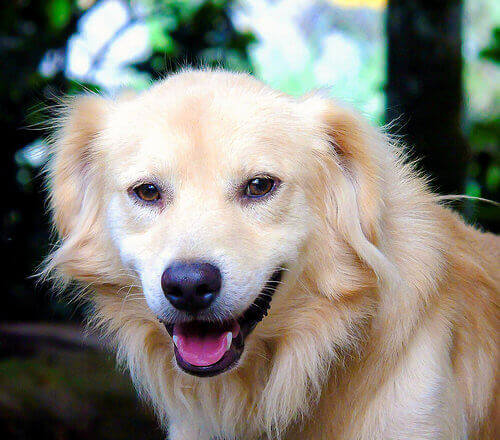 cão-feliz