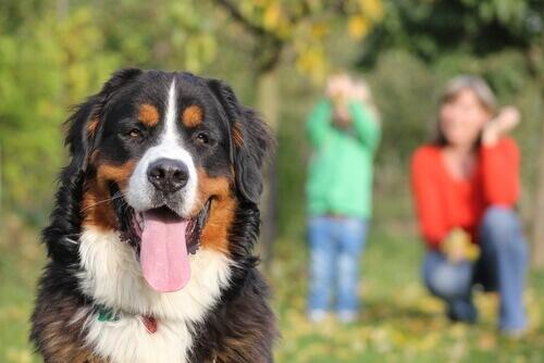 Um cão será fiel até a última batida de seu coração