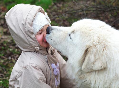Um filhote lambendo sua cara é o melhor psiquiatra