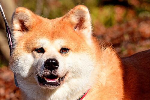 Como reconhecer um cão medroso?