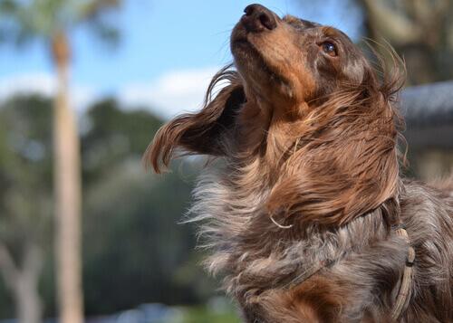 Cão ao vento
