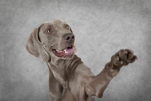 Cachorro canhoto