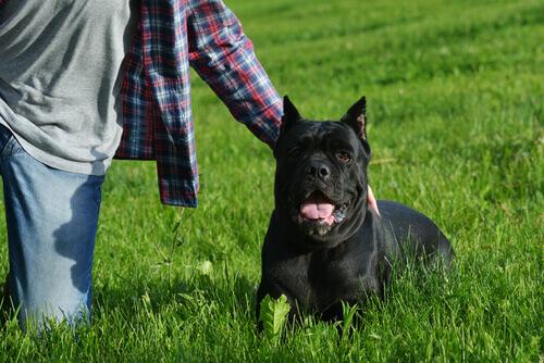 Cão na grama