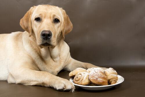 Cão deitado com prato de bolinhos