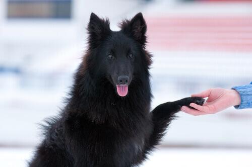 Os cães ignoram as pessoas que não gostam de seus donos